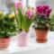 Лунный календарь пересадки комнатных растений на июнь 2021